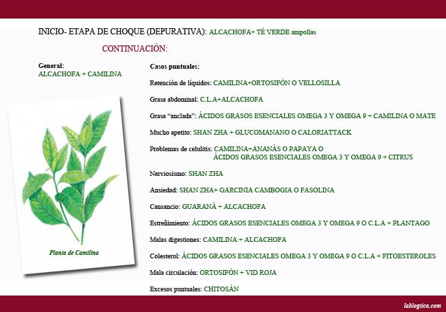 ADIOS GORDITO 2